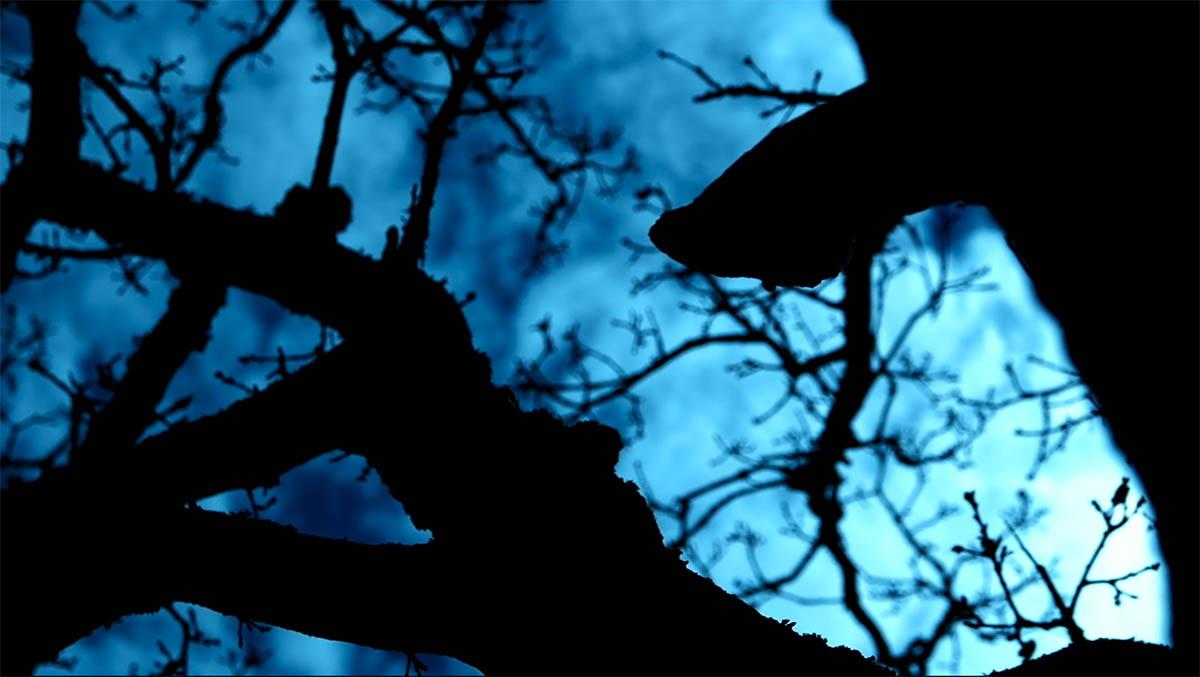Dans l'arbre de mes veines